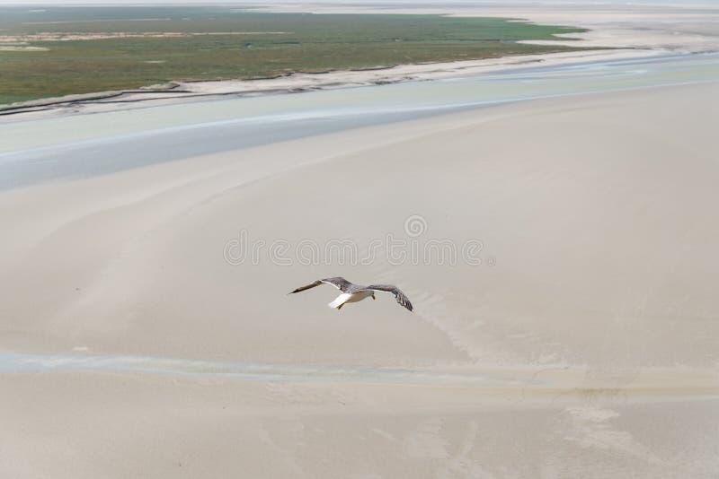 Vogelperspektive von den Seemöwen, die auf Meer fliegen lizenzfreies stockfoto