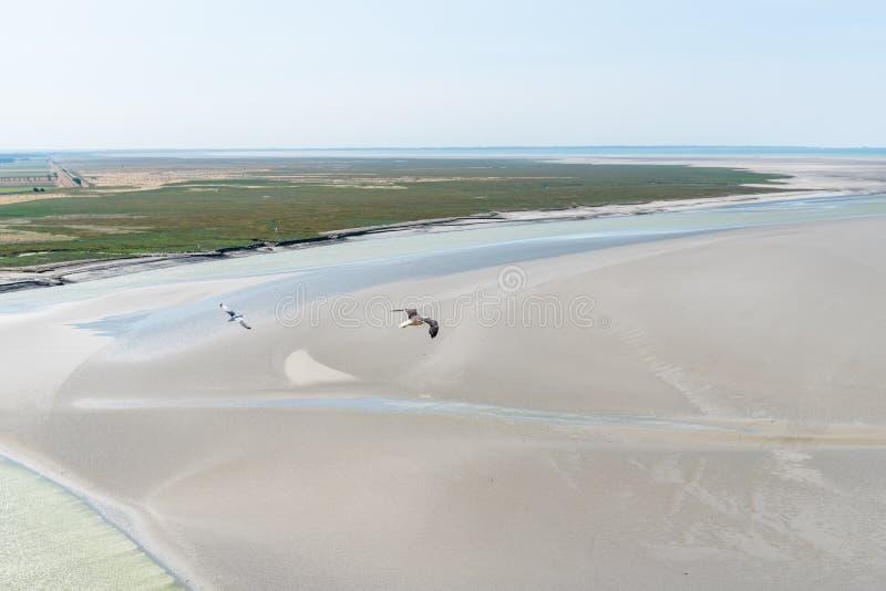 Vogelperspektive von den Seemöwen, die auf Meer fliegen lizenzfreies stockbild