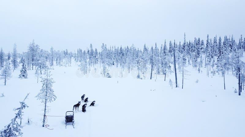 Vogelperspektive von Dogsledding im arktischen Winter von finnischem Lapla stockbild