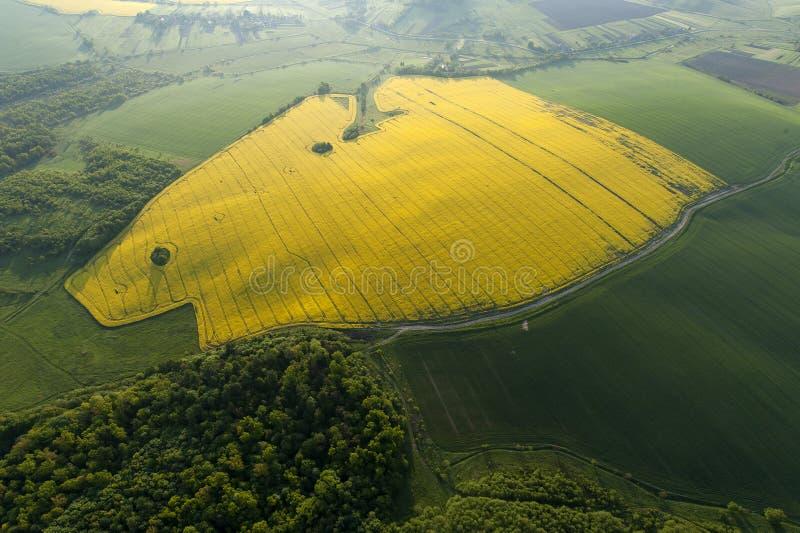 Vogelperspektive von gelben Feldern stockfoto