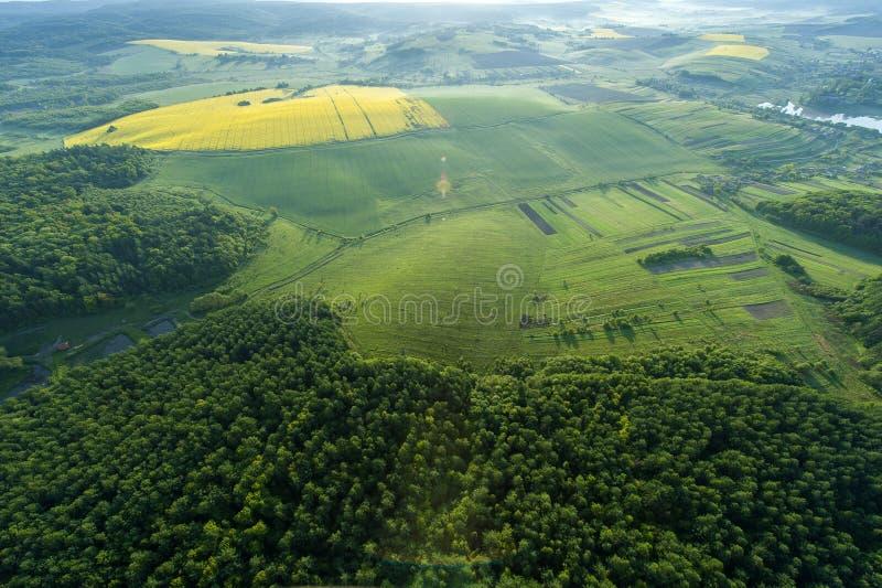 Vogelperspektive von gelben Feldern lizenzfreies stockbild