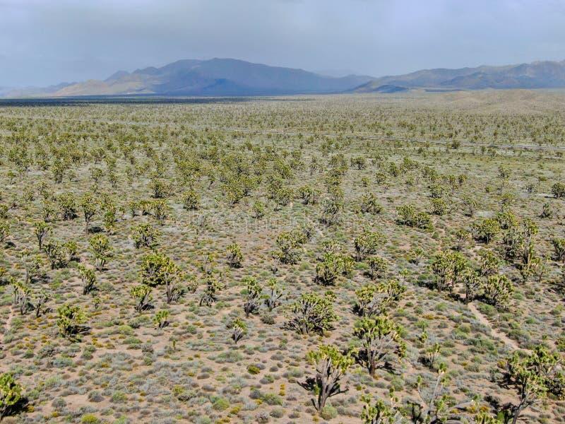 Vogelperspektive von Joshua Tree National Park Kalifornien, USA stockbilder