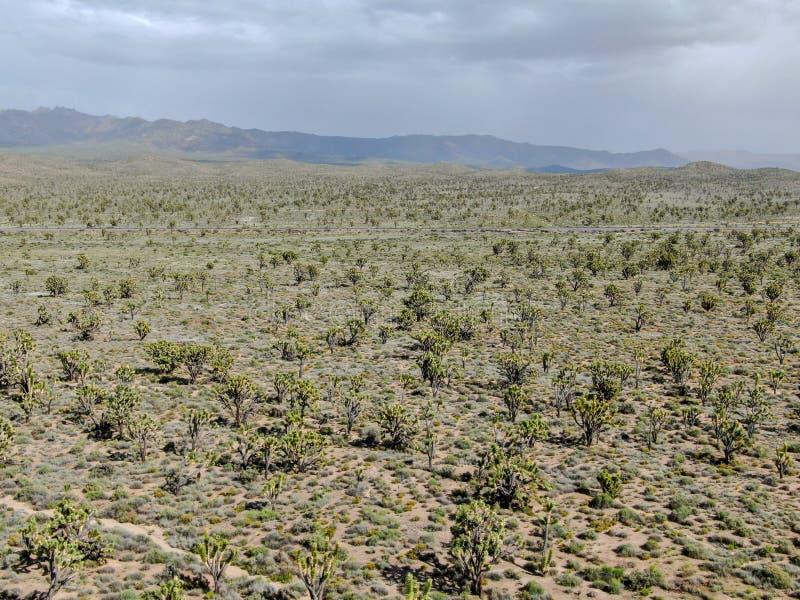 Vogelperspektive von Joshua Tree National Park Kalifornien, USA lizenzfreie stockfotos