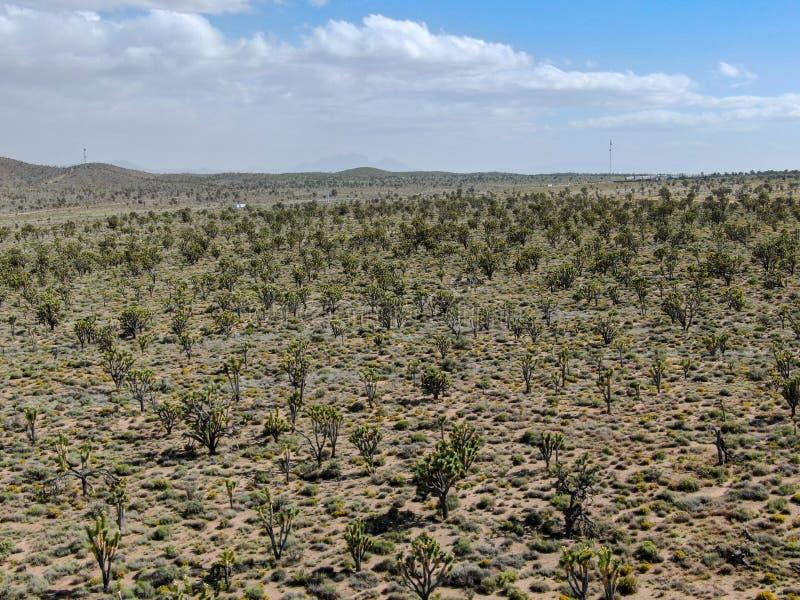 Vogelperspektive von Joshua Tree National Park Kalifornien, USA lizenzfreie stockbilder
