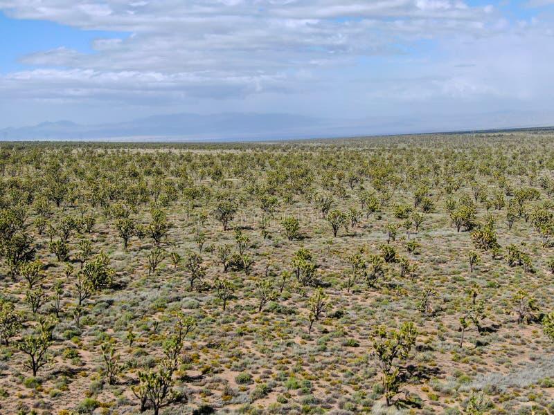 Vogelperspektive von Joshua Tree National Park Kalifornien, USA lizenzfreie stockfotografie