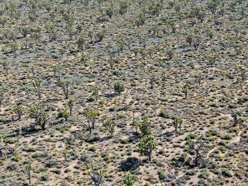 Vogelperspektive von Joshua Tree National Park Kalifornien, USA lizenzfreies stockfoto
