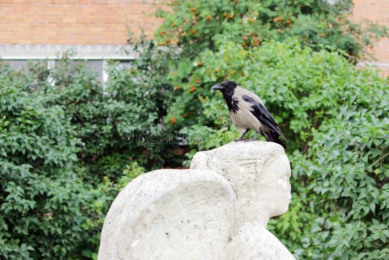 Vogelrabe sitzt auf dem Kopf einer Statue einen Engel, dem Vandalen Nase abbrachen stockfotografie
