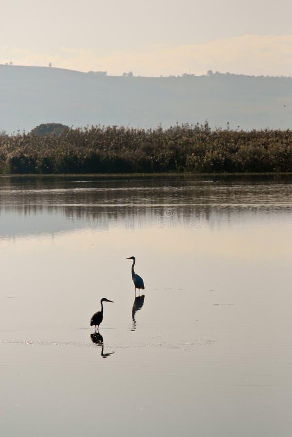 Vogelreflexion stockfotos