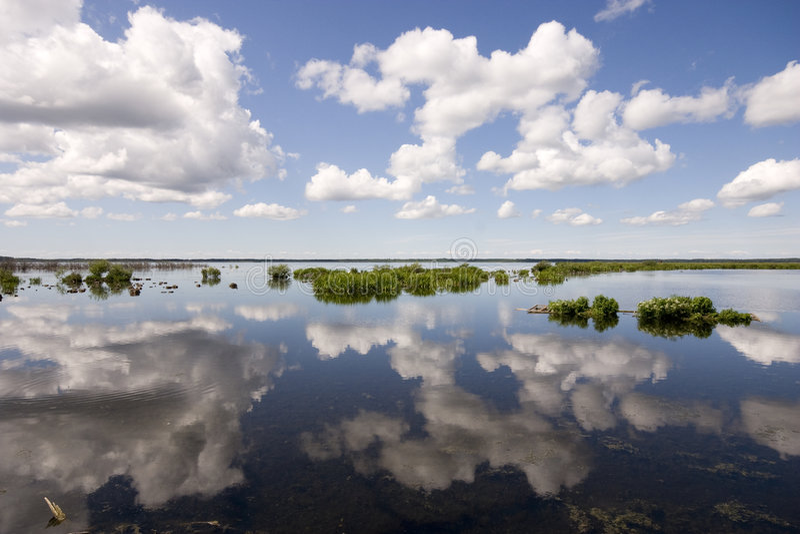 Vogelreservaat, Hornborgasjön, Zweden stock fotografie