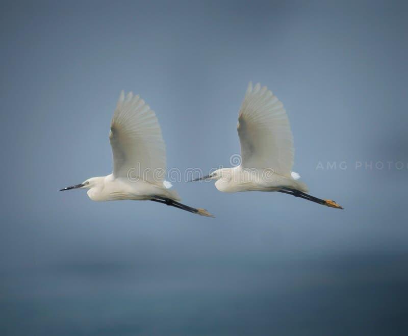2 vogels stock foto's