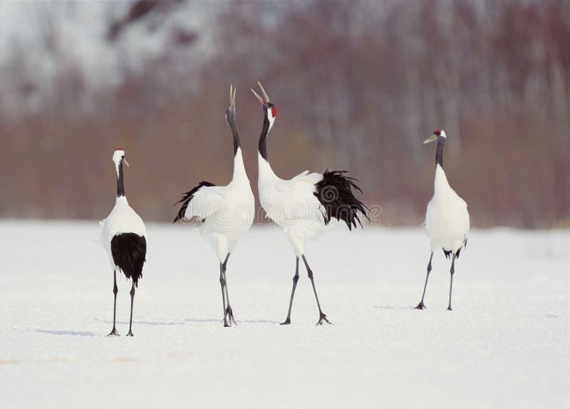 Vogels stock fotografie