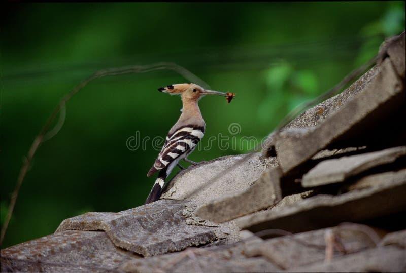 Download Vogels stock afbeelding. Afbeelding bestaande uit vogel - 279765