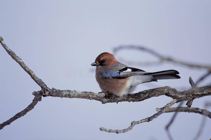 Download Vogels stock foto. Afbeelding bestaande uit groen, bladeren - 279772
