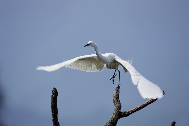 Download Vogels stock foto. Afbeelding bestaande uit sluit, webbed - 279836