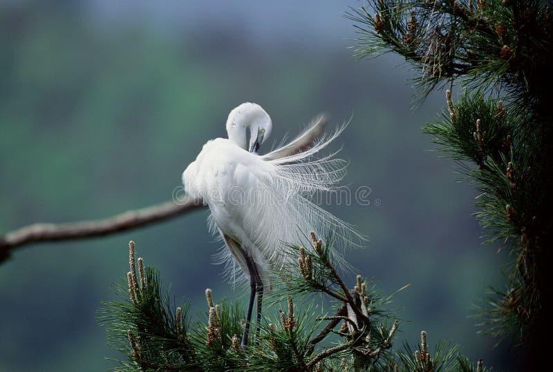 Download Vogels stock foto. Afbeelding bestaande uit egret, hemel - 279856