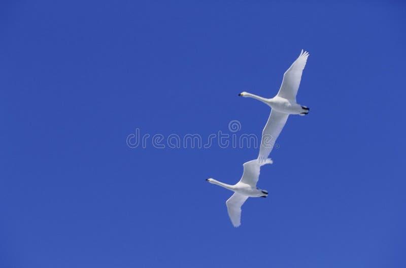 Download Vogels stock foto. Afbeelding bestaande uit kraan, zeevogel - 282308