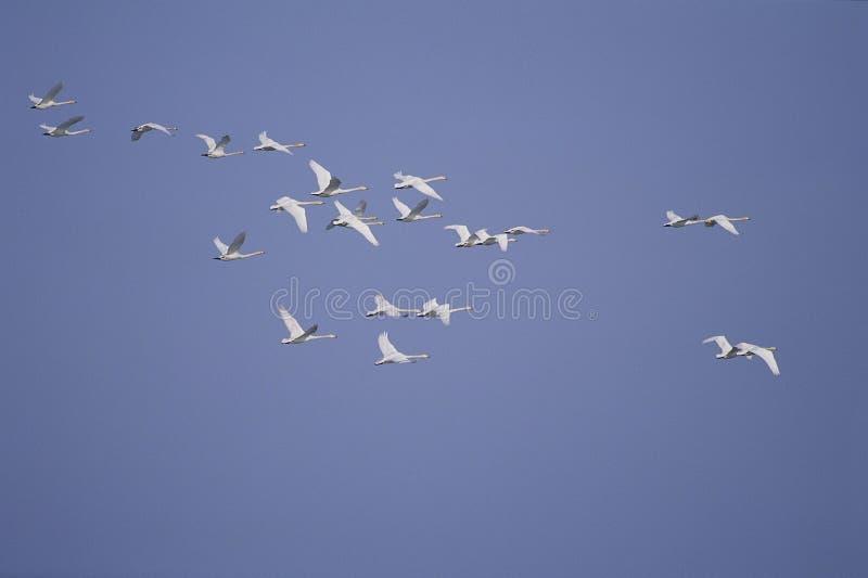 Download Vogels stock afbeelding. Afbeelding bestaande uit sluit - 282327