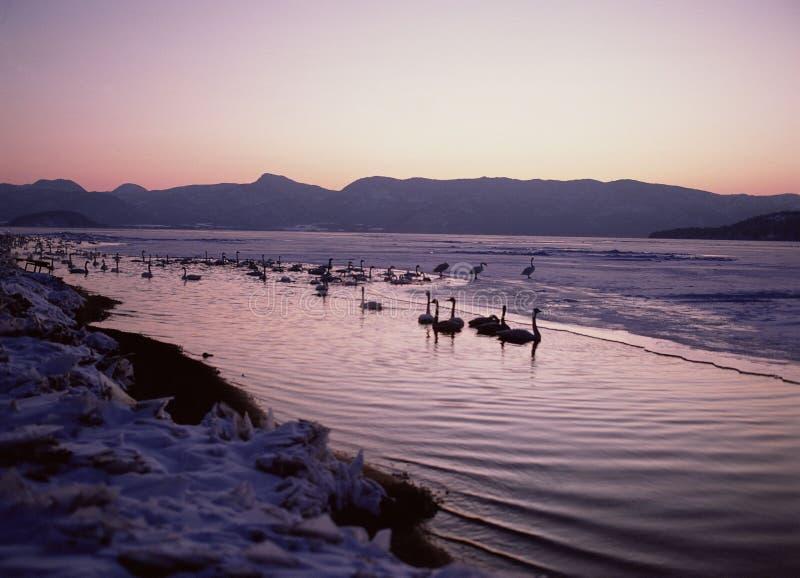 Download Vogels stock foto. Afbeelding bestaande uit webbed, vogel - 283934