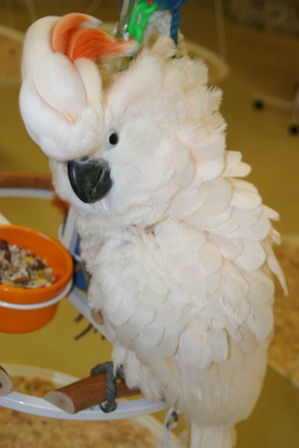 Download Vogels #3 stock foto. Afbeelding bestaande uit dieren, huisdieren - 49642