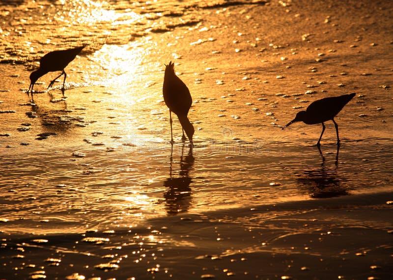 Vogels bij zonsondergang stock afbeelding