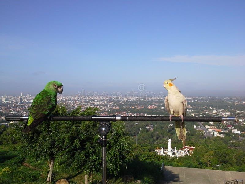 Vogels bovenop heuvel in Hadyai, Songkhla, Thailand royalty-vrije stock foto's