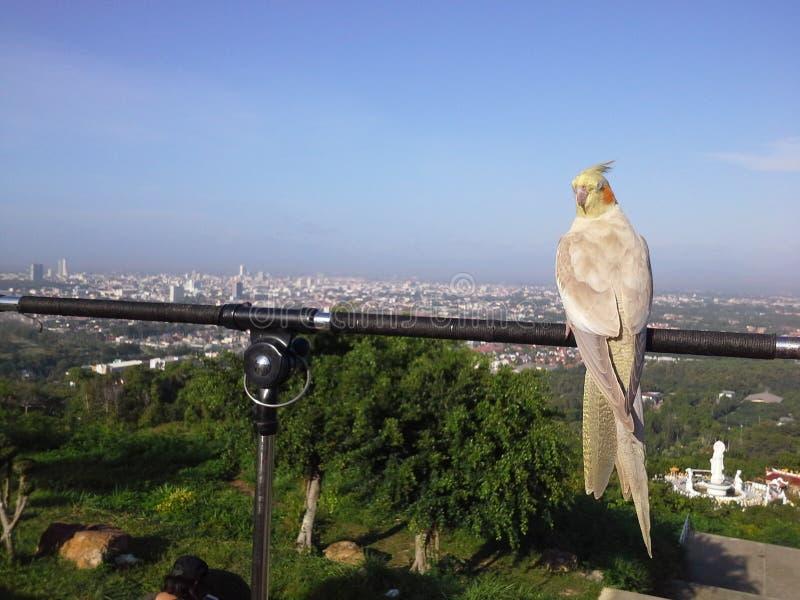 Vogels bovenop heuvel in Hadyai, Songkhla, Thailand royalty-vrije stock foto