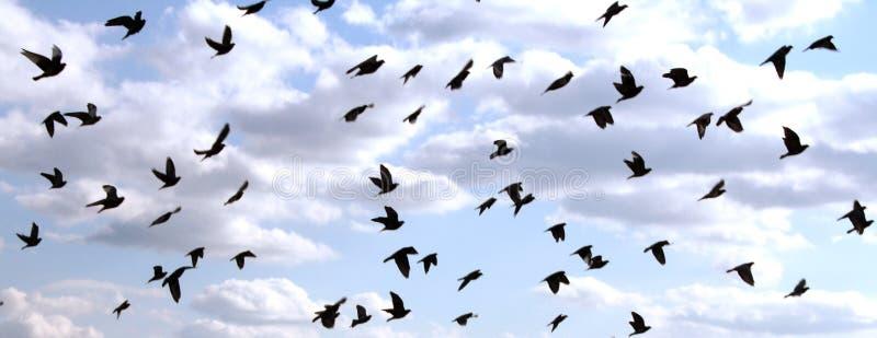 Vogels in de Hemel stock foto