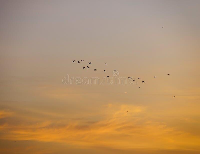 Vogels in de zonsonderganghemel stock fotografie