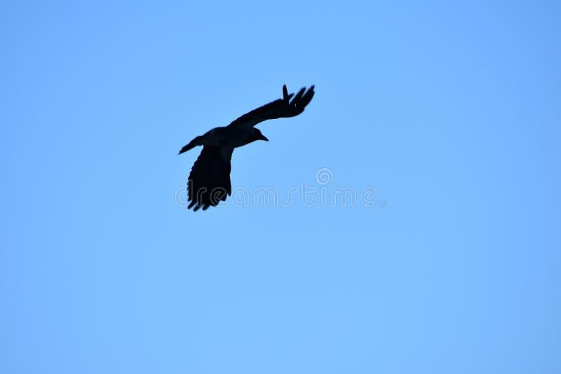 Vogels die op de lente wachten stock foto's