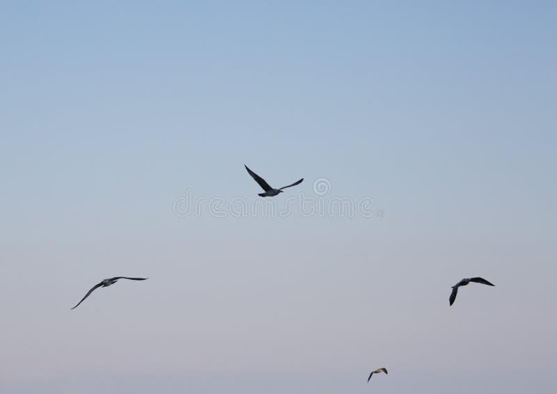 Vogels die over het overzees op de achtergrond van de hemel vliegen stock afbeeldingen