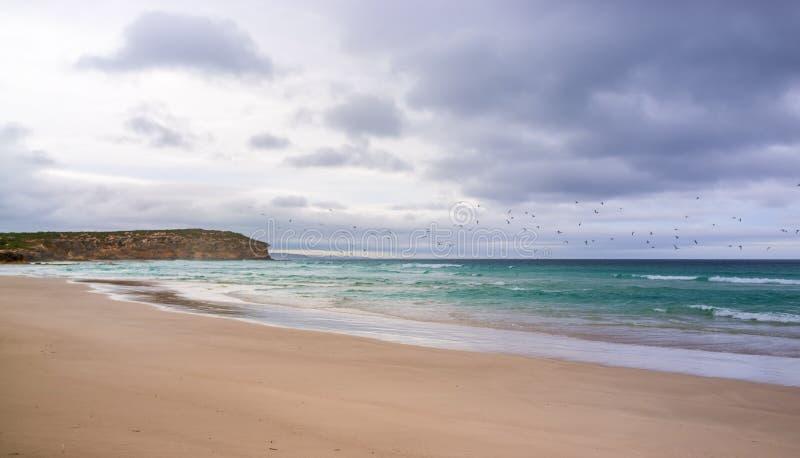 Vogels die over oceaan bij Pennington-Baai in stormachtig weer vliegen kan royalty-vrije stock afbeelding