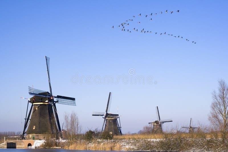 Vogels die over windmolens vliegen stock foto