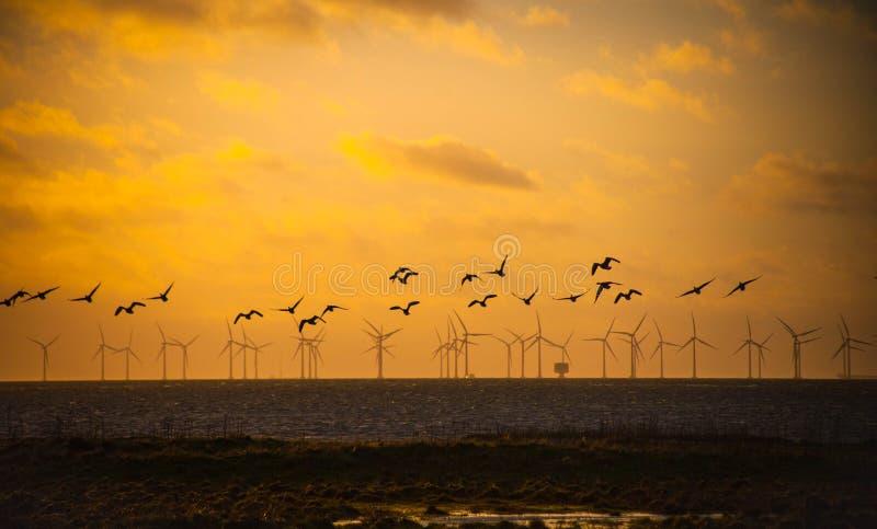 Vogels die over windmolens vliegen stock afbeelding