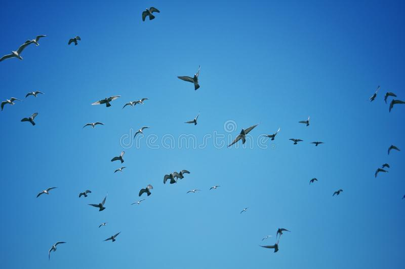 Vogels die tegen een blauwe hemel vliegen stock fotografie