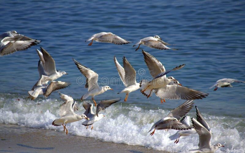 Vogels die uit strand vliegen royalty-vrije stock afbeeldingen