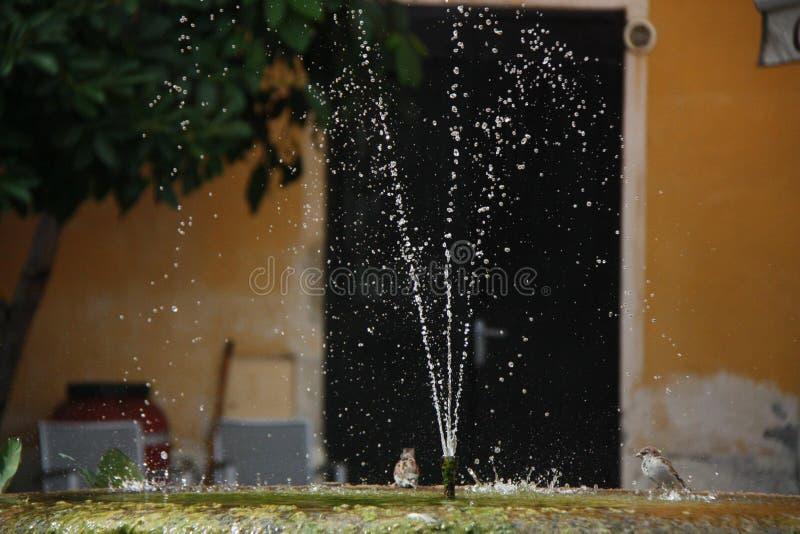 Vogels die van een fontein drinken stock foto