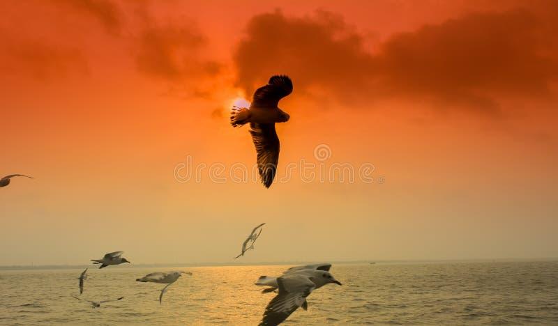 Vogels die vliegen in de rivier op Sunset Time, Sky Creëer een kleurrijke achtergrond, vul Amazing, The Ganga, India stock fotografie