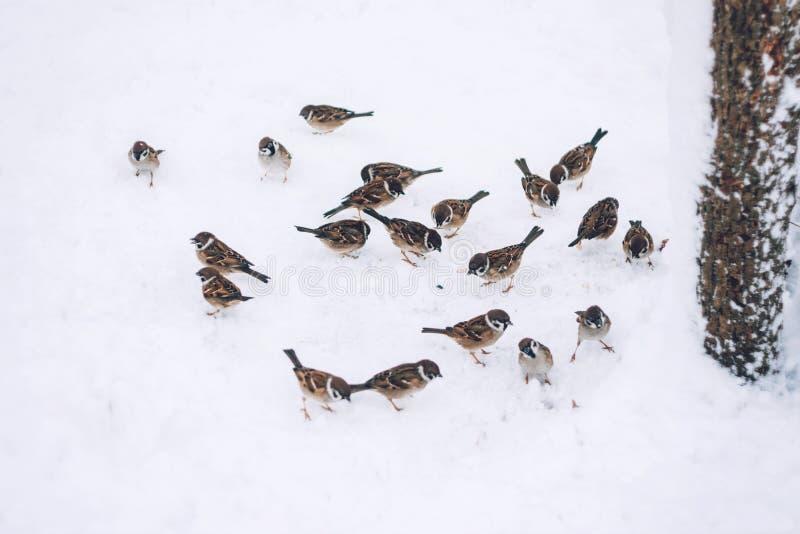 Vogels die zaad van sneeuwgrond eten in het de winterpark Houten met de hand gemaakte vogelvoeder in de koude dag van de de winte royalty-vrije stock foto's