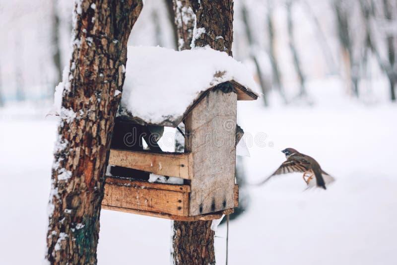 Vogels die zaad van vogelvoeder eten in het de winterpark Houten met de hand gemaakte vogelvoeder in de koude dag van de de winte stock foto's