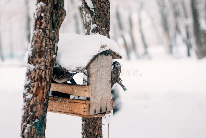 Vogels die zaad van vogelvoeder eten in het de winterpark Houten met de hand gemaakte vogelvoeder in de koude dag van de de winte royalty-vrije stock afbeeldingen