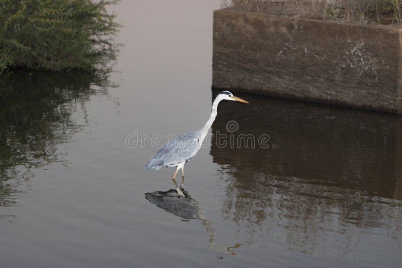 Vogels door het water royalty-vrije stock afbeeldingen
