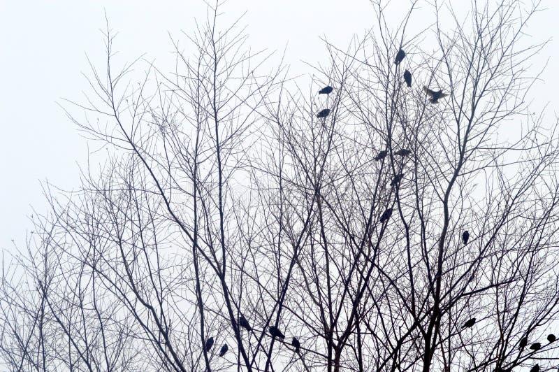Vogels in een de Winterboom royalty-vrije stock afbeeldingen