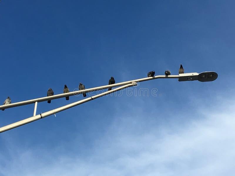 Vogels in een lijn royalty-vrije stock afbeeldingen