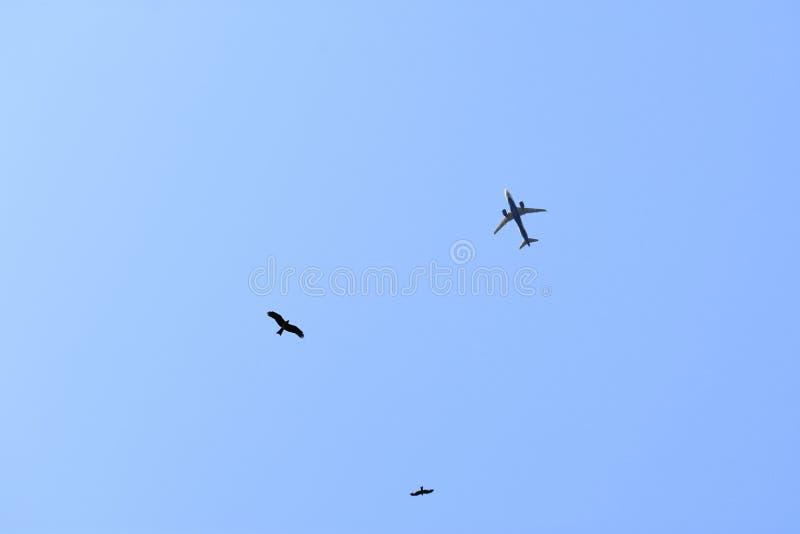 Vogels en een Luchtvliegtuig in blauwe hemel royalty-vrije stock afbeelding