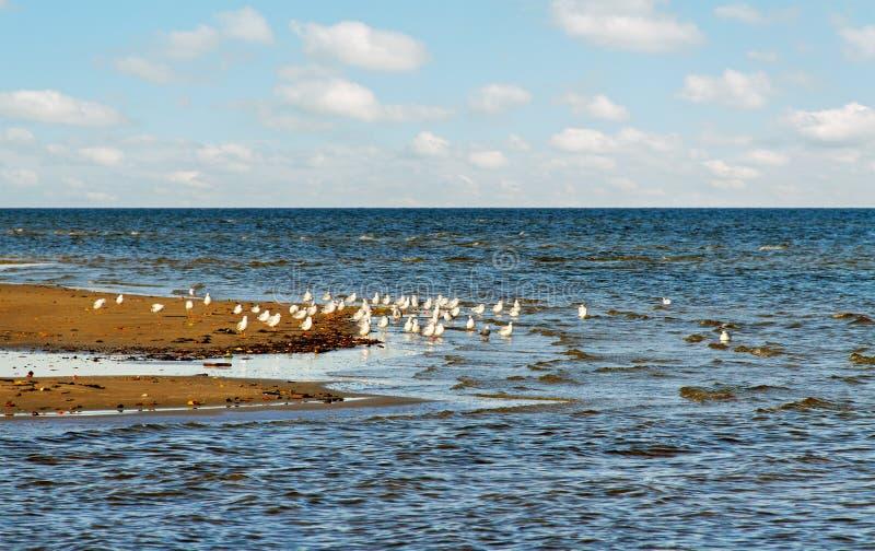 Vogels en overzees. royalty-vrije stock foto