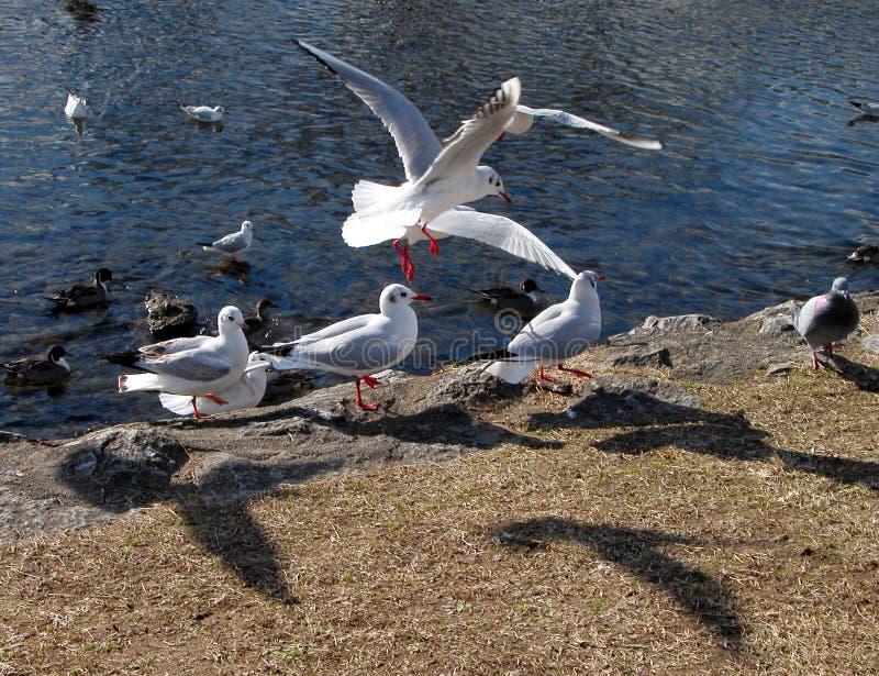 Vogels En Schaduwen Royalty-vrije Stock Afbeelding