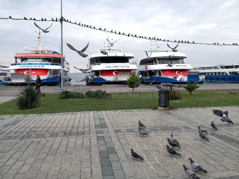 Vogels en schepen in het eiland van prinsessen Buyukada royalty-vrije stock fotografie