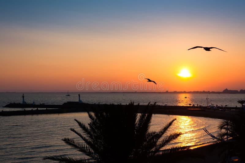 vogels en zonsondergang op een strand van le grau du roi frankrijk stock afbeelding. Black Bedroom Furniture Sets. Home Design Ideas