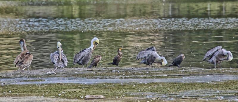 Vogels het baden royalty-vrije stock foto