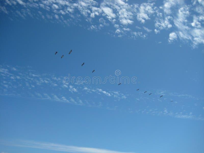 Vogels het Vliegen royalty-vrije stock afbeeldingen